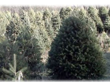Image for Greenview Tree Farm